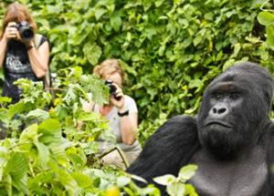 mountaing-gorilla-trekking